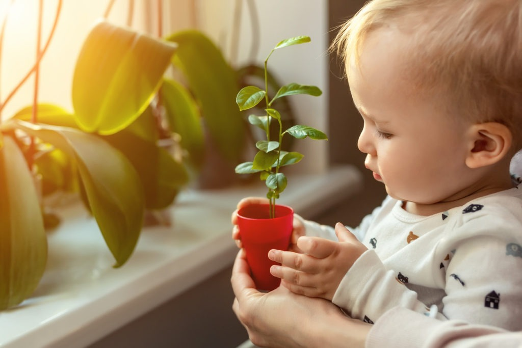 Indoor Air Quality improved with Plants